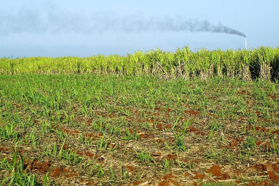 Le rhum , Canne à sucre de Guadeloupe , Les îles de Guadeloupe