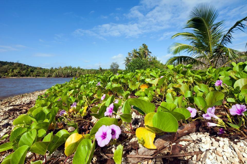Flora , Guam