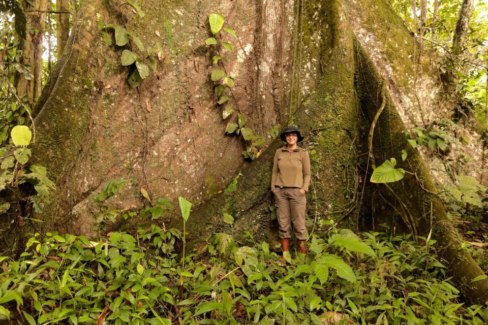La zona maya , Guatemala