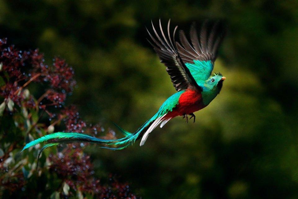 , Il Quetzal, La fauna e la flora, Guatemala