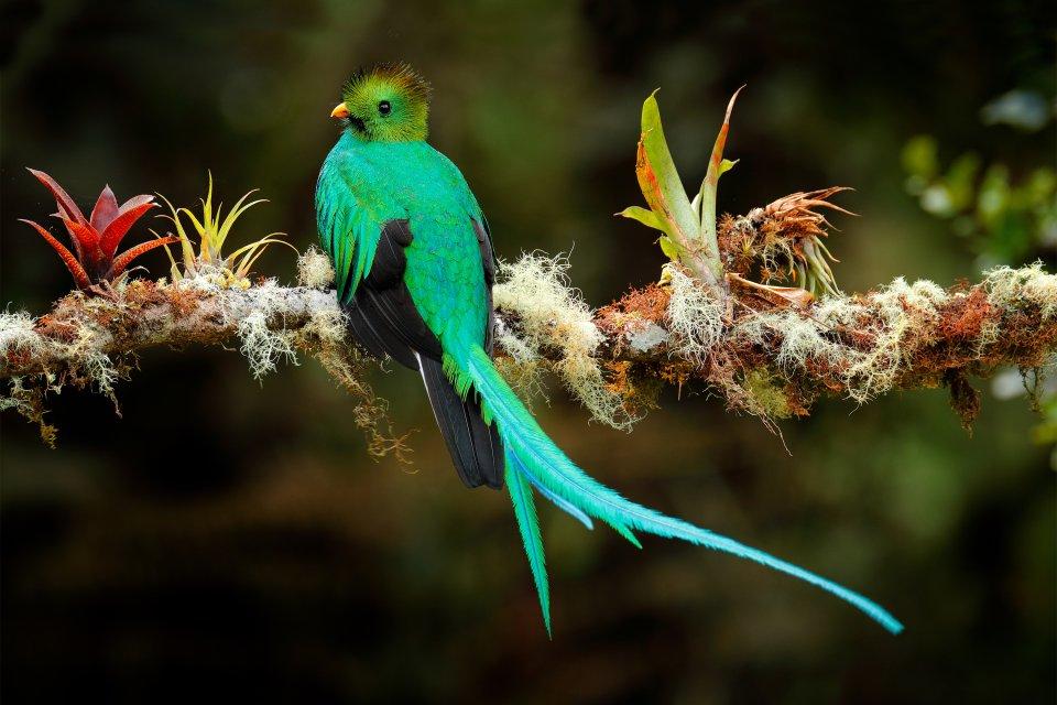 , El Quetzal, Fauna y flora, Guatemala