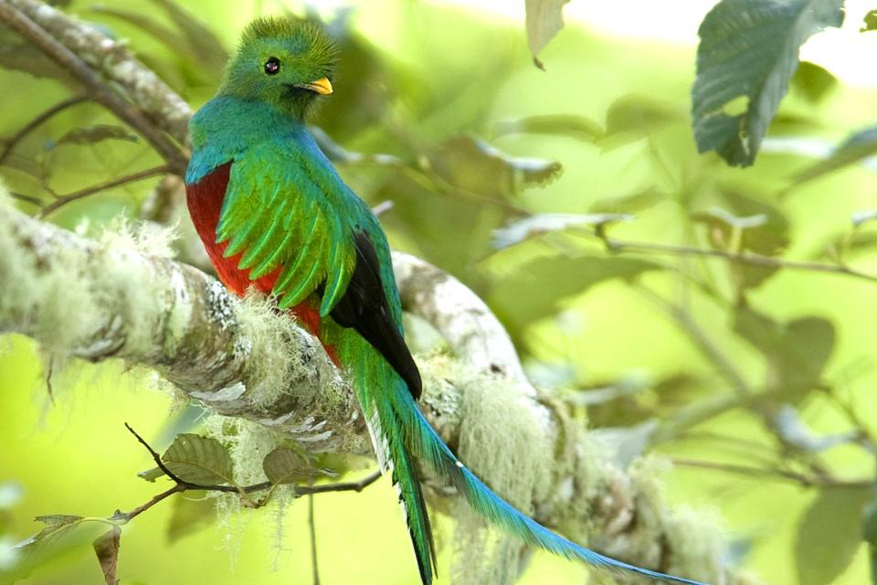 Il Quetzal , Guatemala