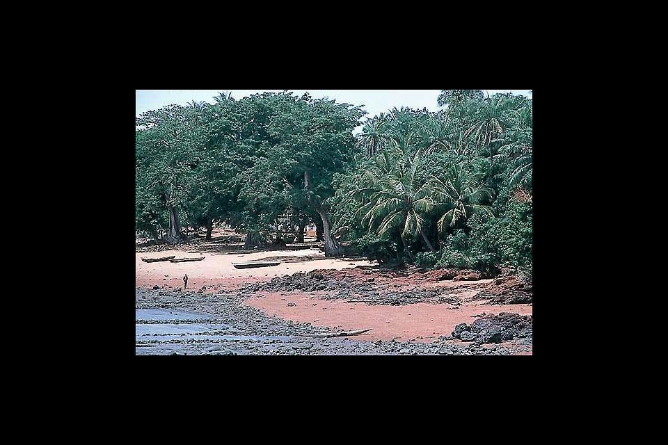 The Atlantic Coast , Guinea