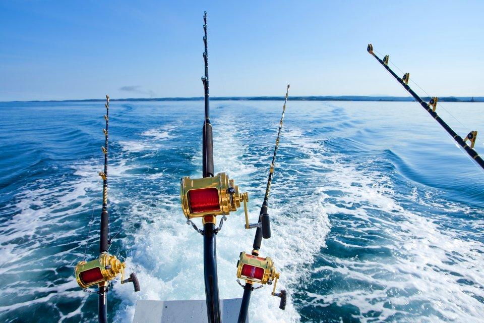 La battuta di pesca, La fauna e la flora, Azzorre