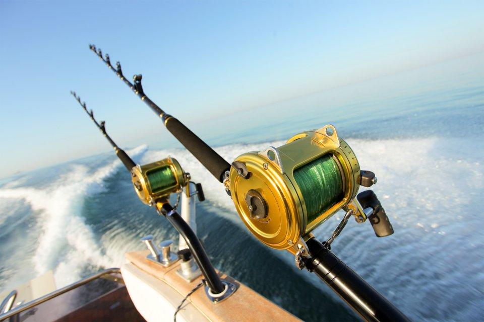 La pesca alle Azzorre, La battuta di pesca, La fauna e la flora, Azzorre