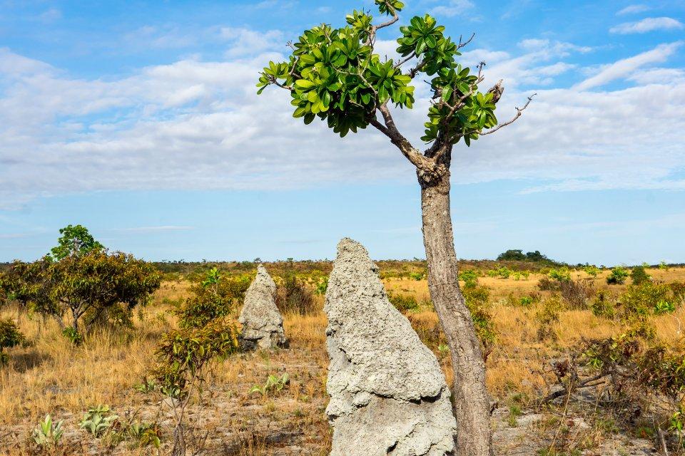 La región de Rupununi , Guyana