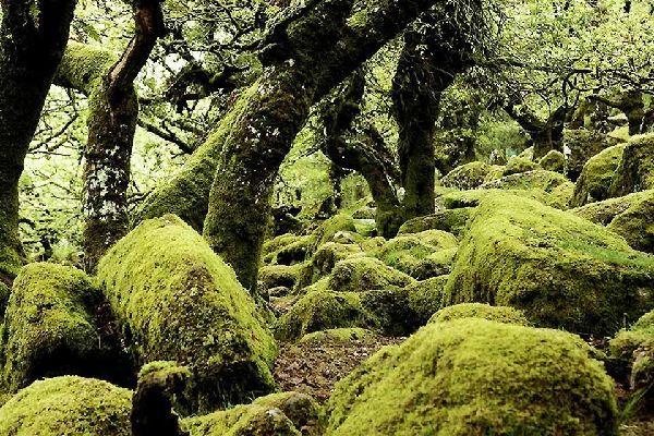 La flora , Los bosques y las zonas verdes ingleses , Reino Unido
