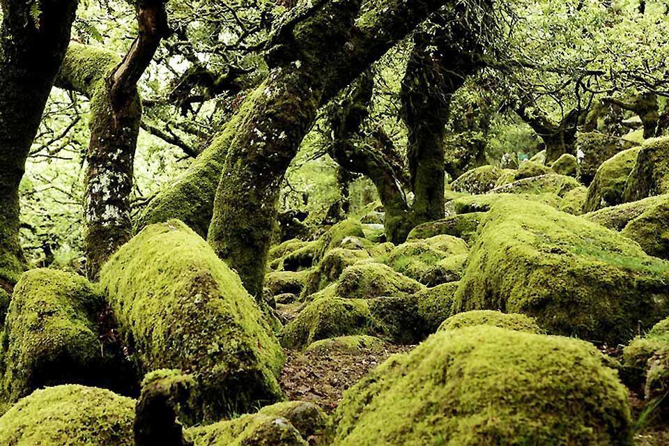 Die Flora , Die Wälder und Grünflächen in England , Großbritannien