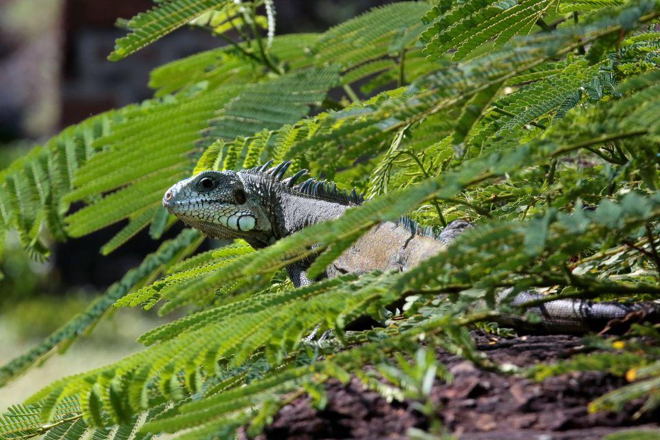 , Grabrielle creek, The fauna, Guiana