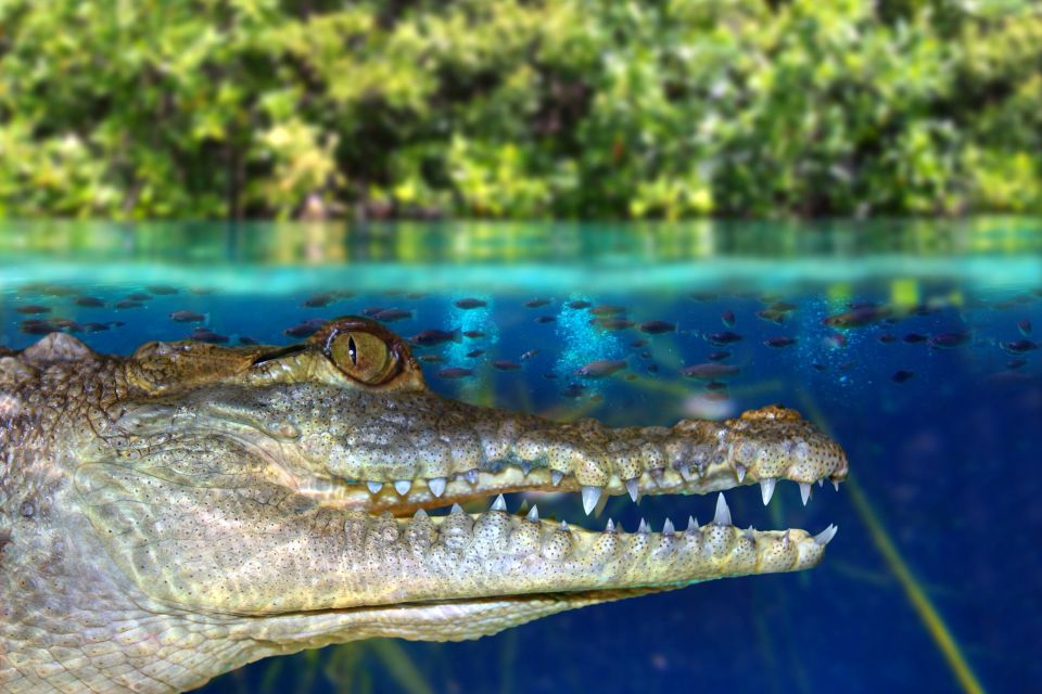 Grabrielle creek, The fauna, Guiana