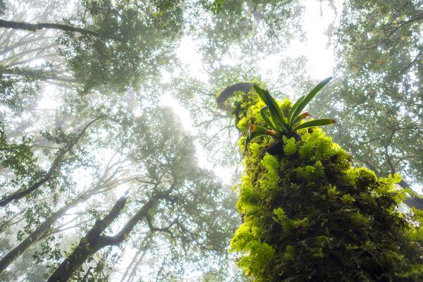 Das Amazonasbecken, Amazonas-Regenwald, Die Flora, Französisch-Guyana