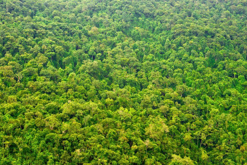 Préférence La forêt amazonienne - Guyane ZQ28