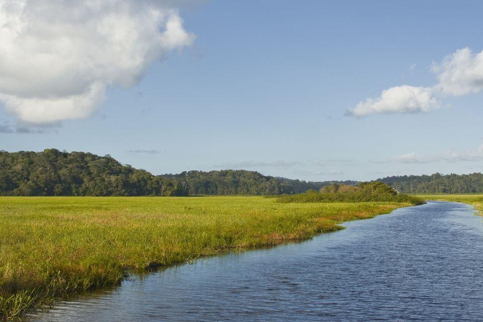 , Swamplands, The flora, Guiana