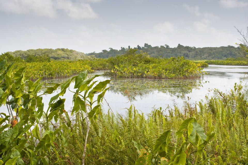 Guyana marshland, Swamplands, The flora, Guiana
