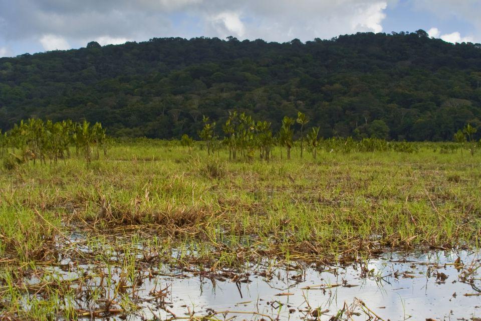 Swamplands, The flora, Guiana