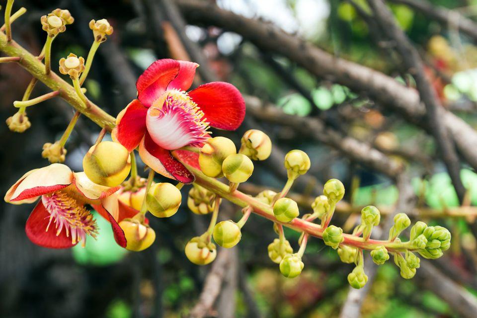 The Aouara palm, The coastal plain, The flora, Guiana