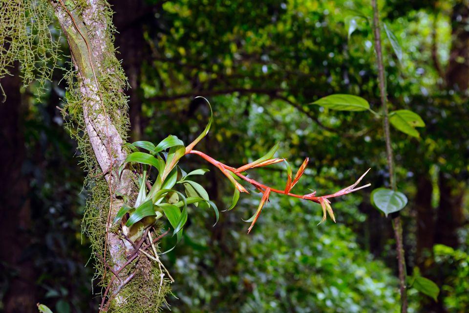 The coastal plain, The flora, Guiana