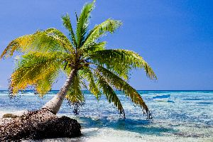 La péninsule Sud , Haïti