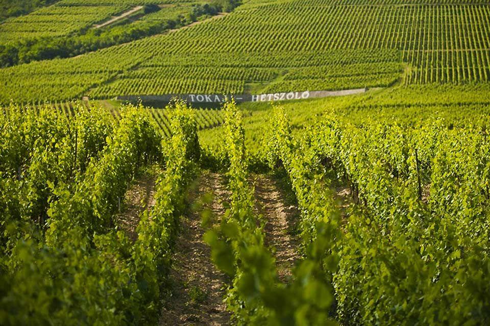 Les vignobles, Le Nord et l'Est, Les paysages, Hongrie