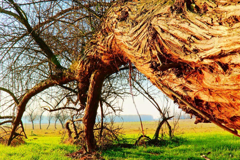 La Puszta, la grande pianura ungherese, La Grande Pianura della Puszta, I paesaggi, Ungheria