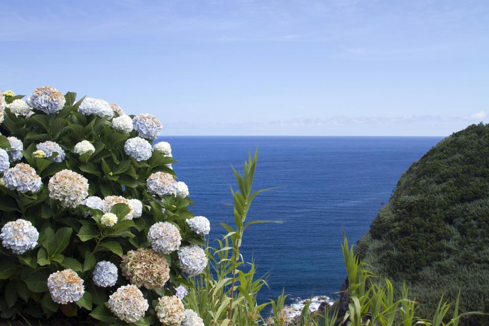 La flora , La flora delle Azzorre , Portogallo