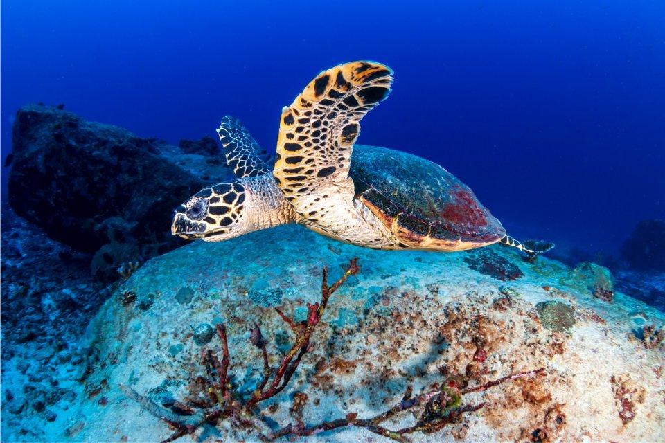 Cayman Brac:, Coasts, Cayman Islands