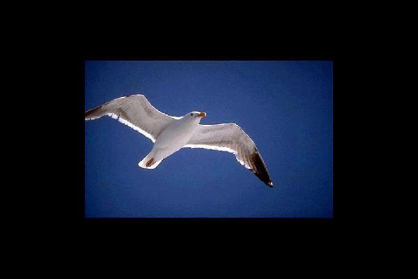 Le riserve di uccelli , Isole Cayman