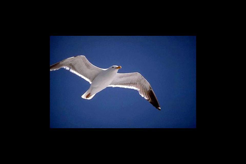 Bird reserves , Cayman Islands