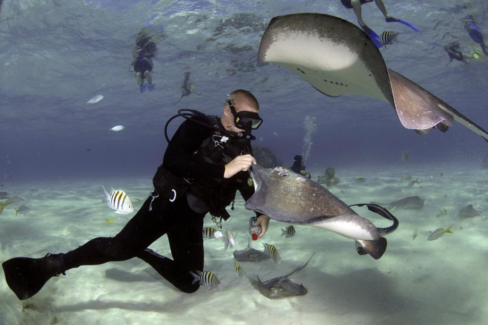 La cité des Raies (Grand Cayman) , Iles Cayman