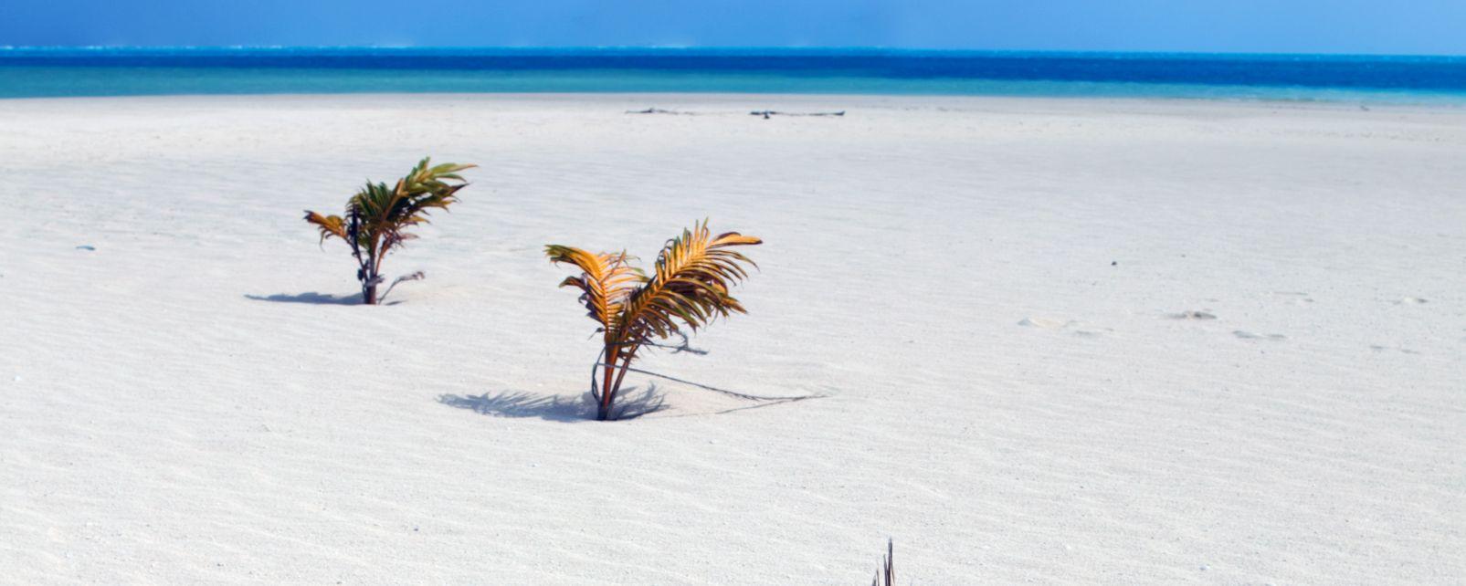 Les côtes, atiu, cook, cook islands, pacifique, plage