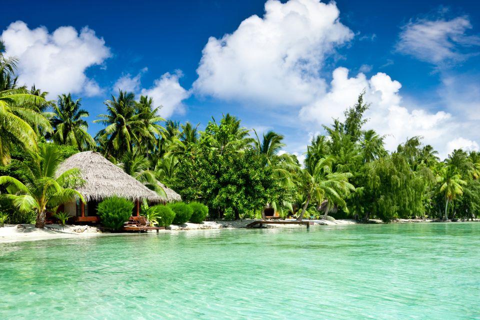 La faune et la flore, ile, cook, pacifique, végétation, flore, palmier, plage, cocotier