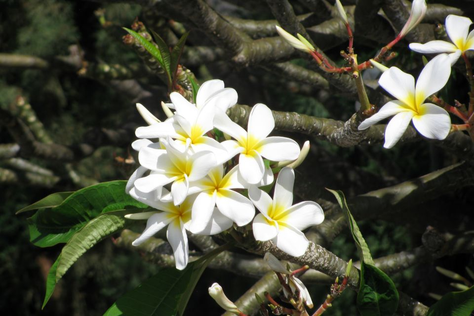 La faune et la flore, ile, cook, pacifique, végétation, flore