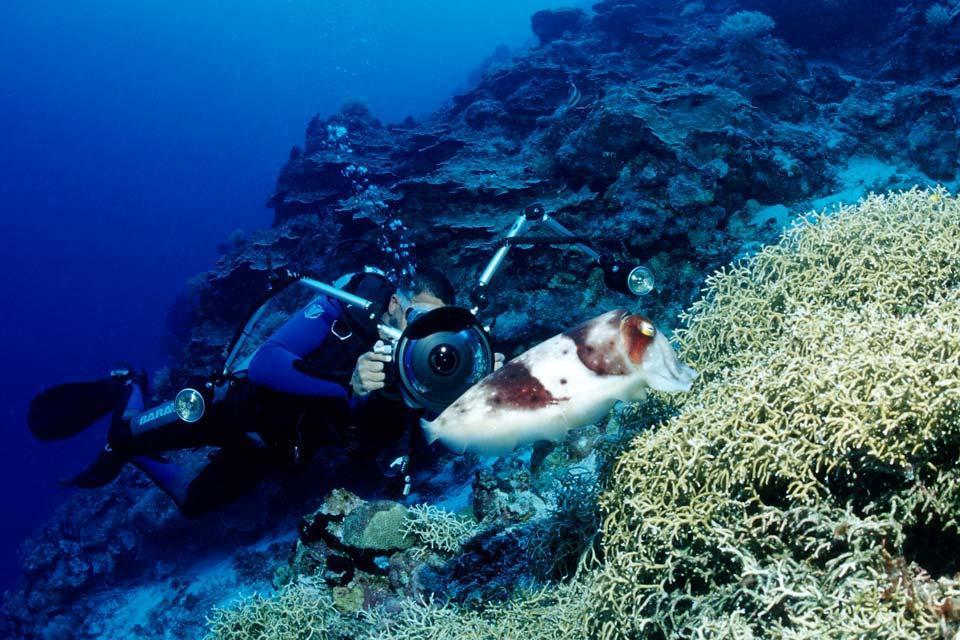 La plongée sous-marine , Iles Marshall