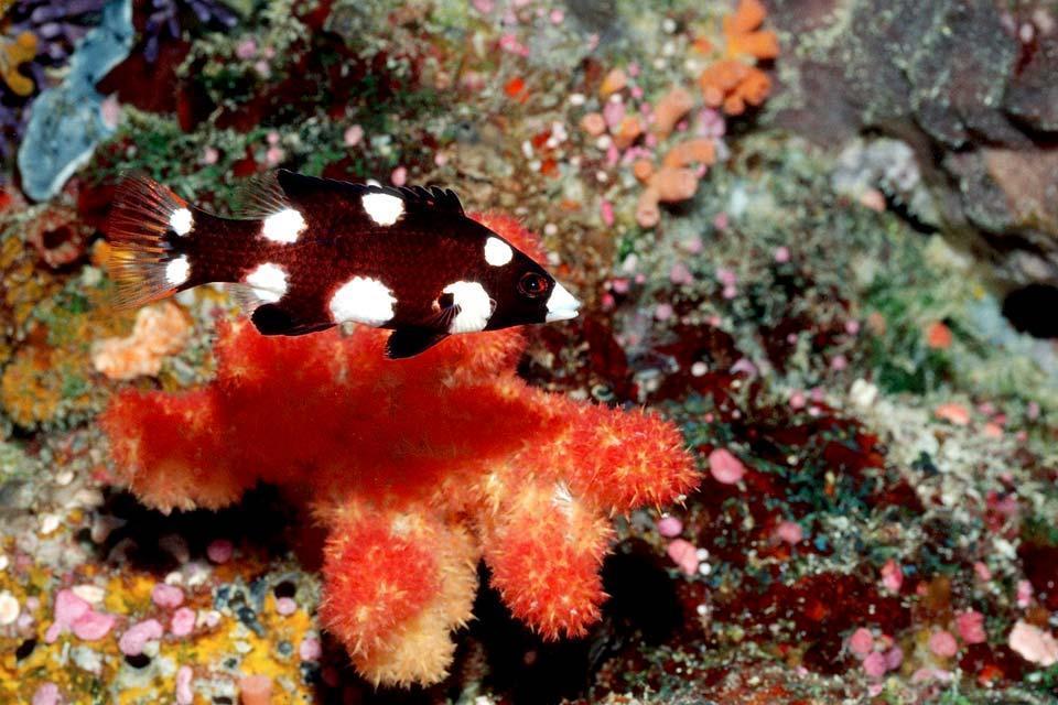 La faune sous-marine , Iles Marshall