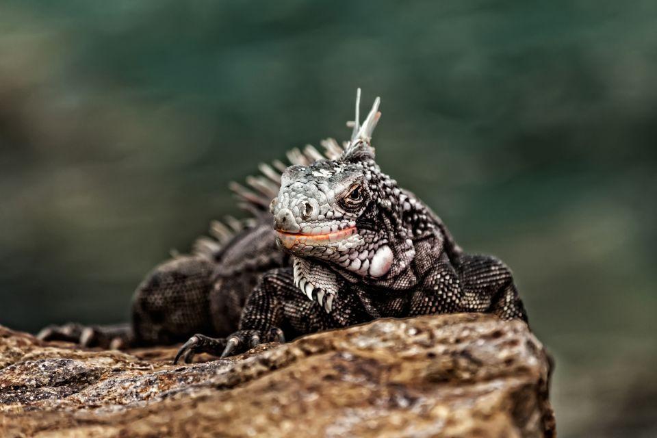 Wildlife United States Virgin Islands Us Virgin Islands
