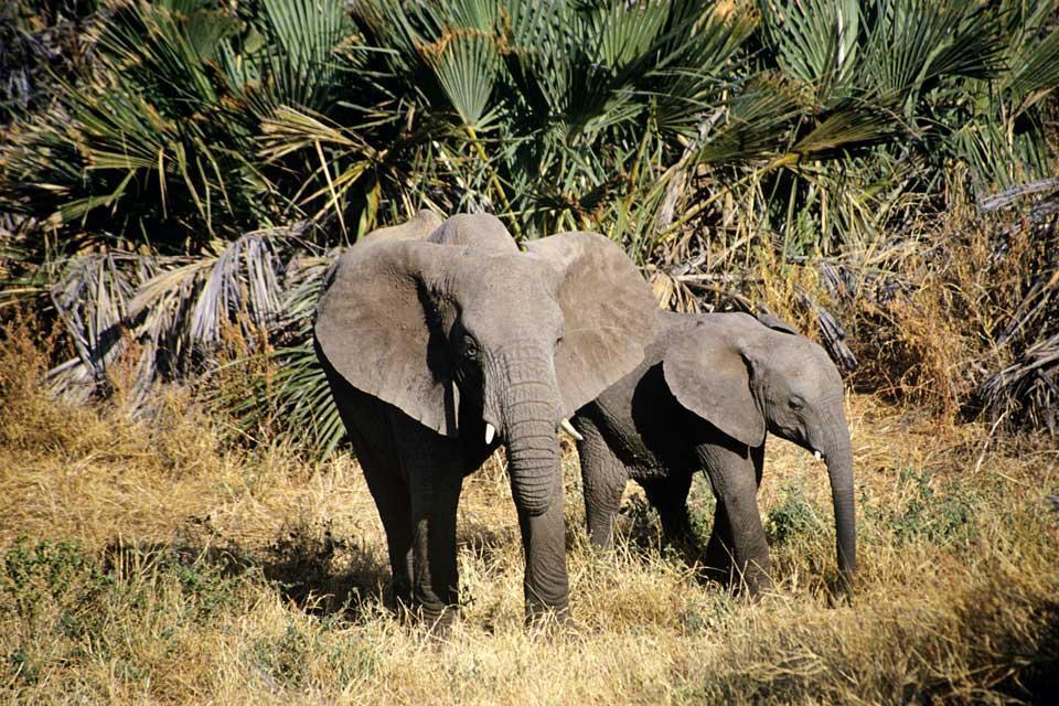 La foresta e la savana , Angola