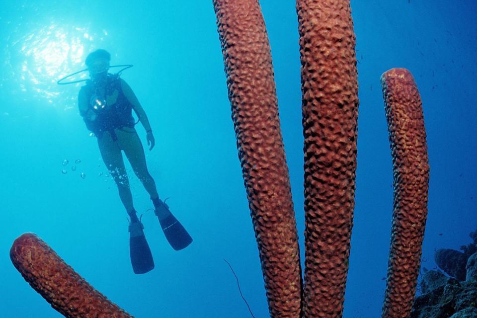 Diving sites , British Virgin Islands