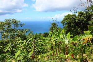 Die Flora , Britische Jungferninseln