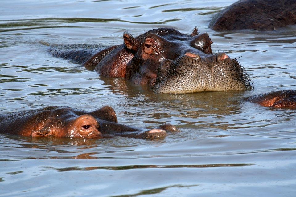 I grandi mammiferi , Angola