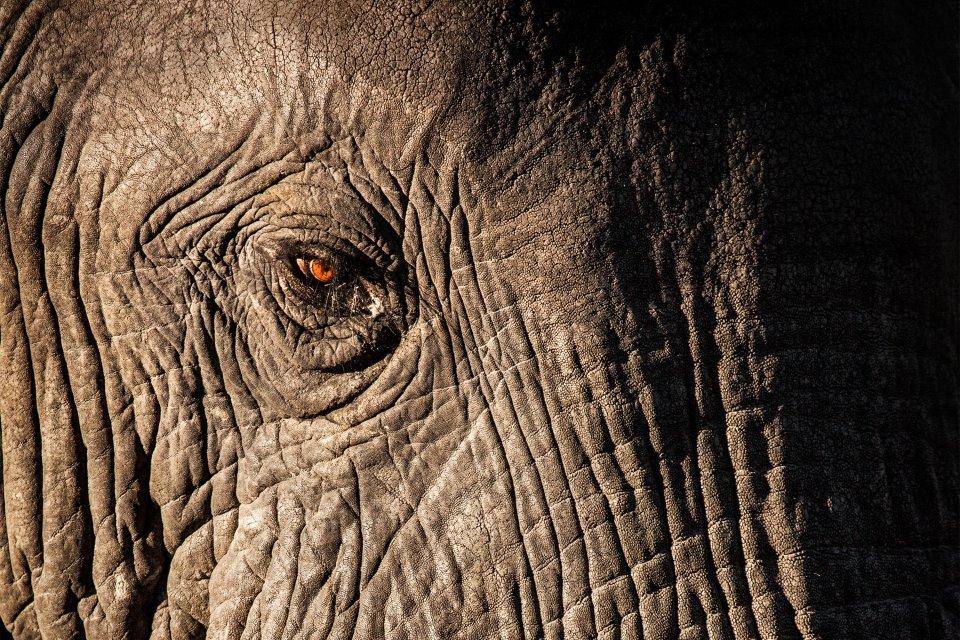 Occhio di elefante, I grandi mammiferi, La fauna e la flora, Angola