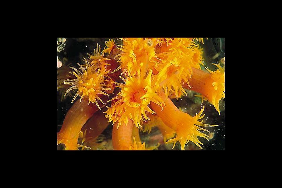 L'immersione , Coralli di Wengel , Cile