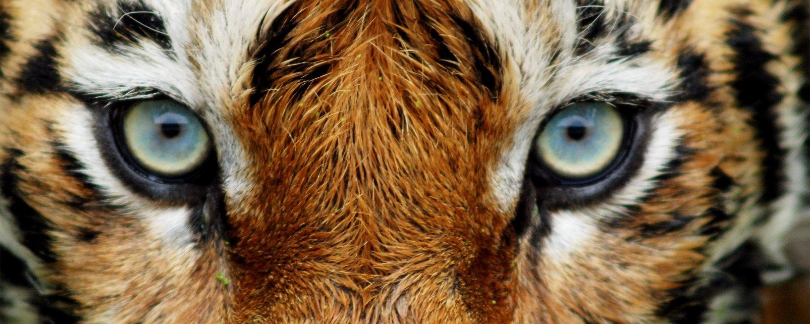 , El parque zoológico de Thiruvananthapuram, Arte y cultura, Kerala