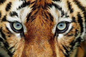 El parque zoológico de Thiruvananthapuram , India