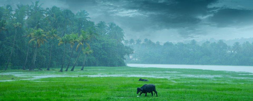 La reserva de Parambikulam