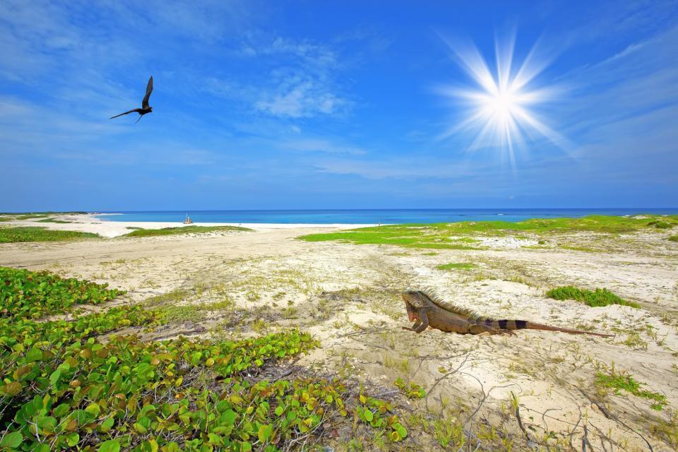 Aruba's beaches , An Aruba coast, the Netherlands Antilles , Netherlands Antilles