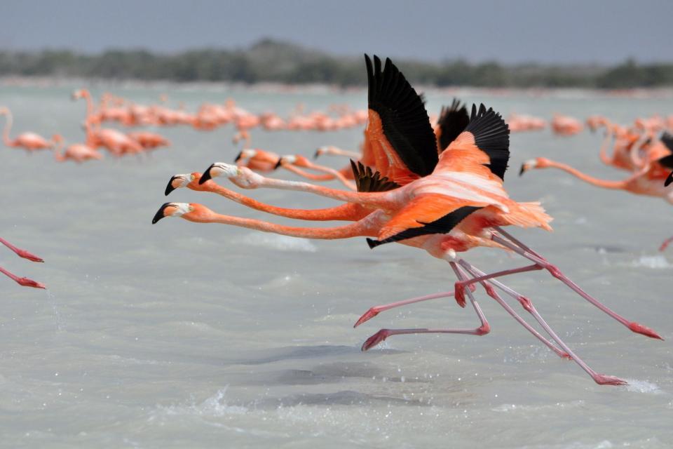 La réserve naturelle de Calimère , Les oiseaux de Mudulamai , Inde