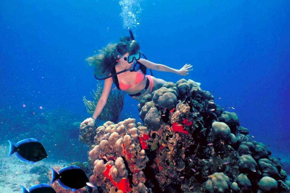Le immersioni a Bonaire , Escursione al largo di Bonaire , Antille olandesi