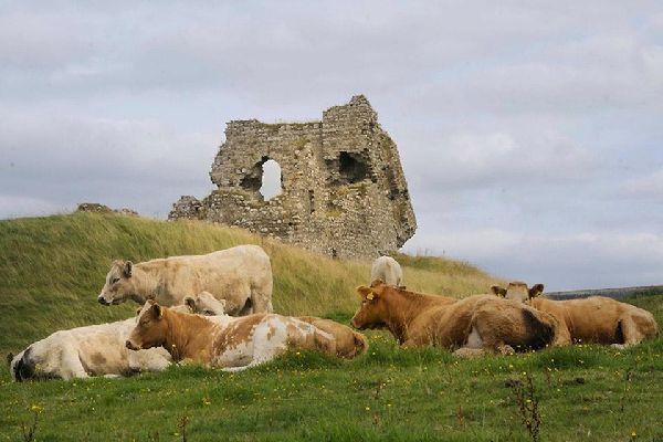 Die Prärien und die in der Landesmitte gelegenen Seen , Prärien und Seen von Zentralirland , Irland