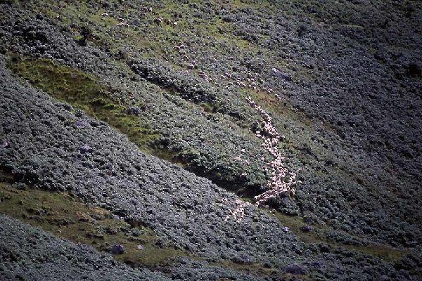 Das Granitgebirge von Wicklow , Weideland auf den Wicklow-Bergen , Irland
