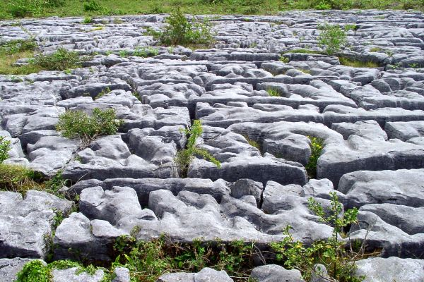 The grikes, the Burren region, The Burren limestone desert., Landscapes, Ireland